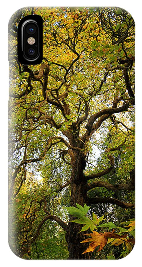 Coole Park IPhone X Case featuring the photograph Coole Park Tree Galway Ireland by Pierre Leclerc Photography
