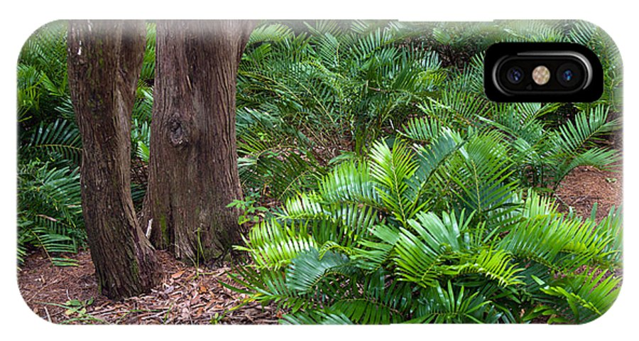 Florida; Coontie; Zamia; Integrifolia; Arrowroot; Indian; Bread; Breadroot; Plant; Rare; Wild; Prote IPhone X Case featuring the photograph Coontie Florida Arrowroot Or Indian Breadroot by Allan Hughes