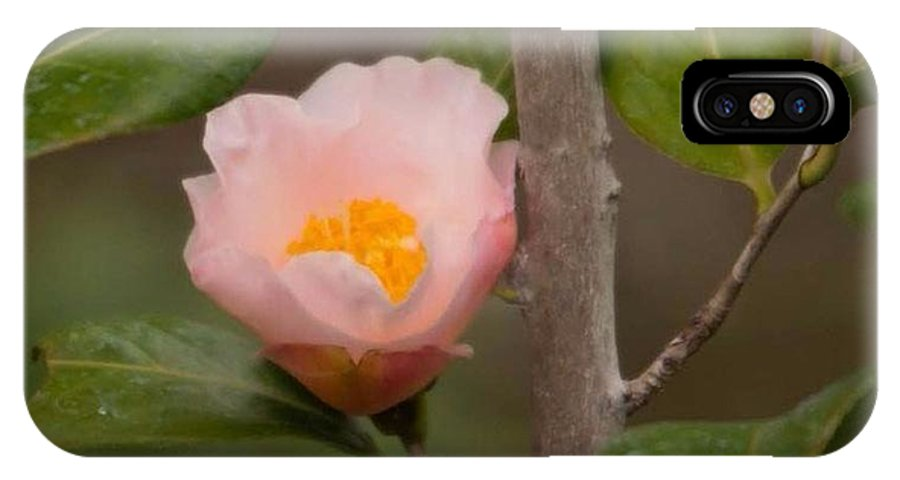 Coral Camellia IPhone X / XS Case featuring the photograph Coral Camellia 1 by Marta Robin Gaughen