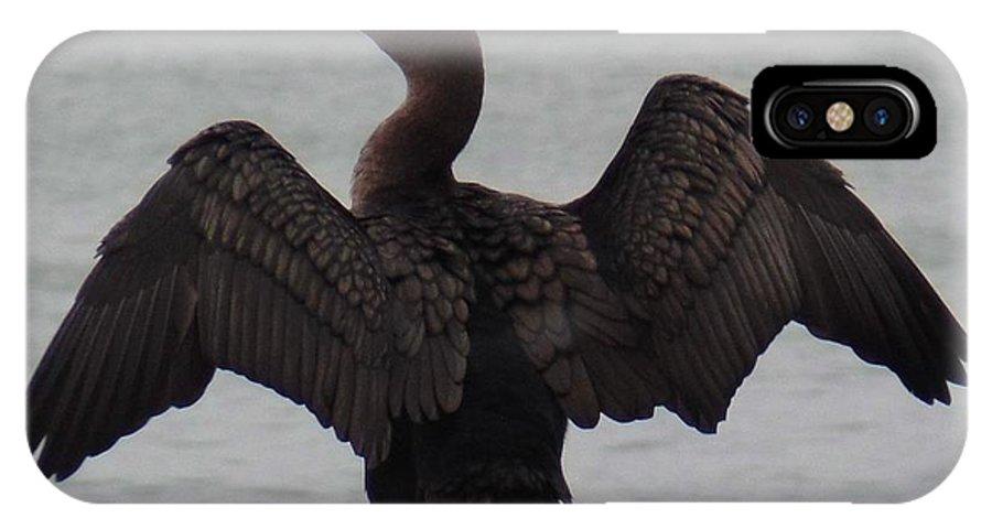 Cormorant IPhone X Case featuring the photograph Cormorant In Bellingham by Karen Molenaar Terrell