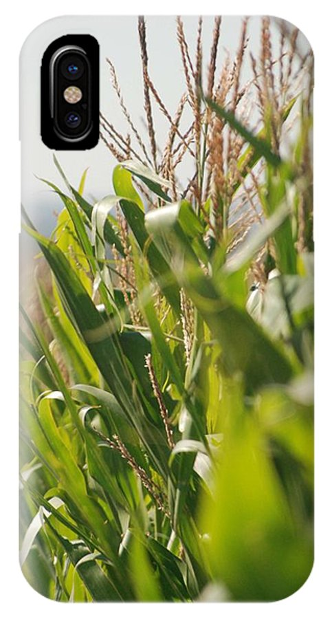 Corn IPhone X Case featuring the photograph Corn Country by Margaret Fortunato