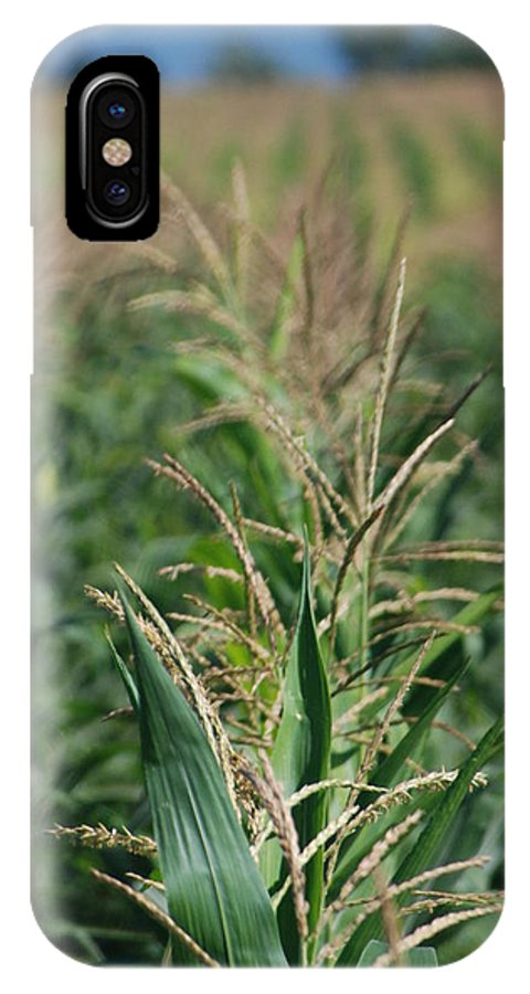 Country IPhone X Case featuring the photograph Corn Rows by Margaret Fortunato