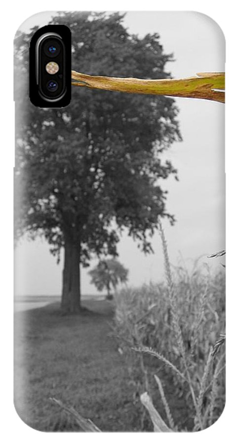 Landscape IPhone X Case featuring the photograph Corn Tree by Dylan Punke