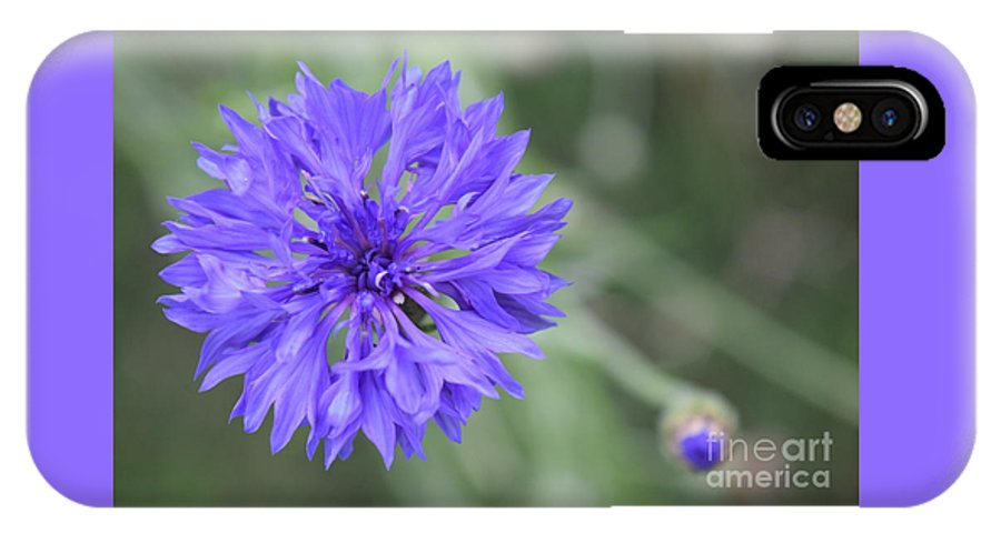 Flower IPhone X Case featuring the photograph Cornflower by Deb Arndt