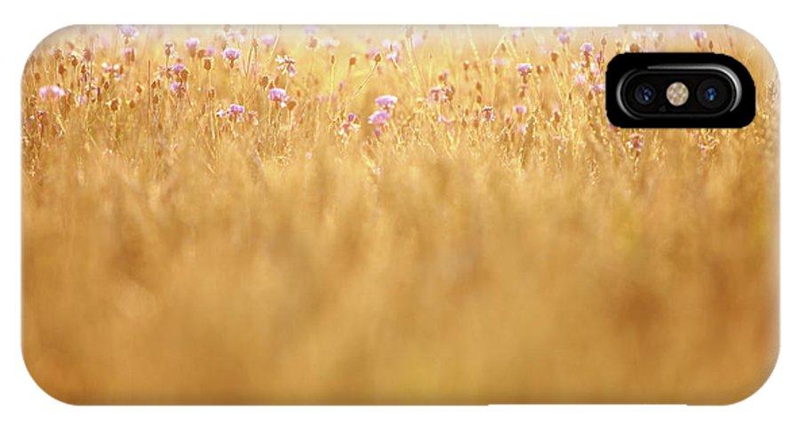 Cornflower IPhone X Case featuring the photograph Cornflowers by Jana Behr