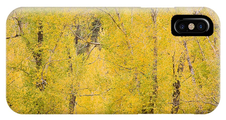 Yellow IPhone X Case featuring the photograph Cottonwood Autumn Colors by James BO Insogna