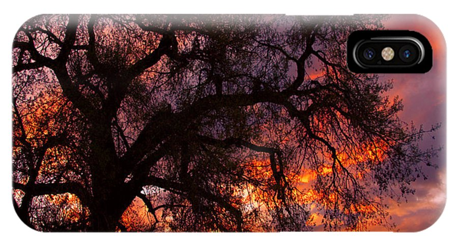 Silhouette IPhone X Case featuring the photograph Cottonwood Sunset Silhouette by James BO Insogna