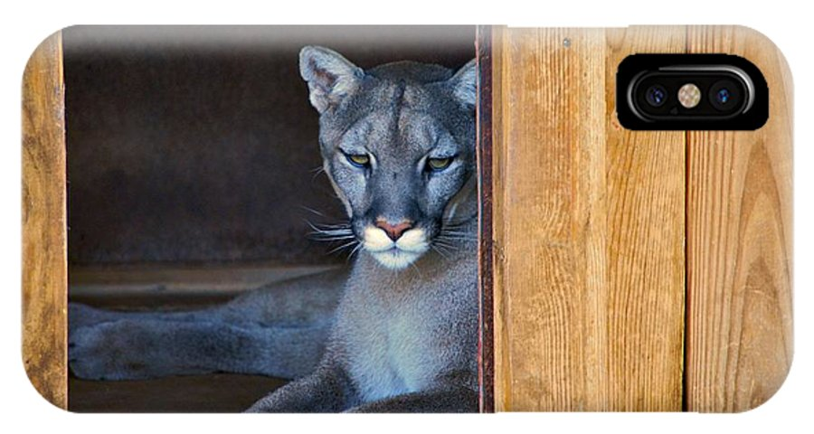 Cougars IPhone X Case featuring the photograph Cougar by Donna Shahan