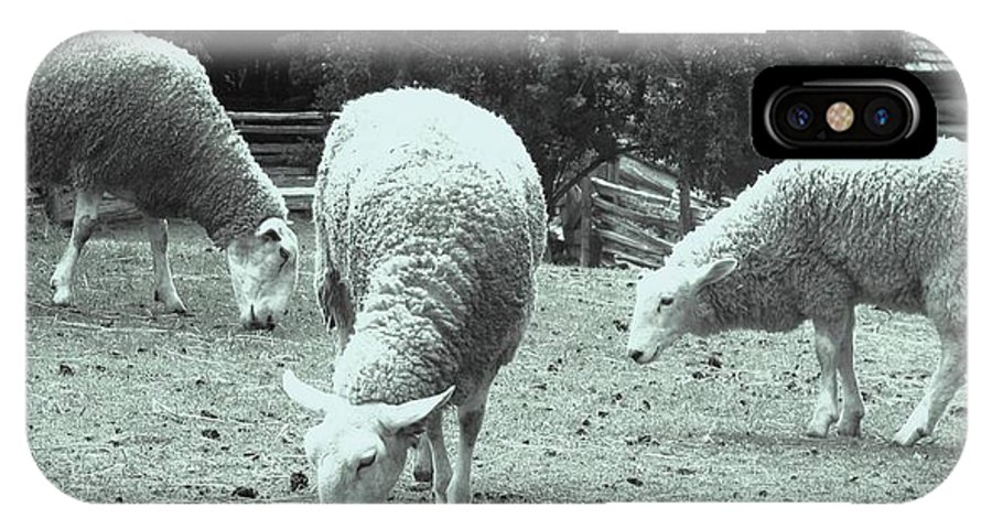 Sheep IPhone X Case featuring the photograph Counting Sheep by Ian MacDonald
