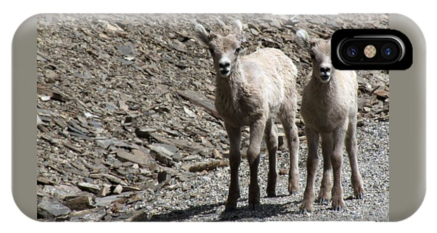 Baby IPhone X Case featuring the photograph Couple of Cuties- Baby Bighorn by Tiffany Vest