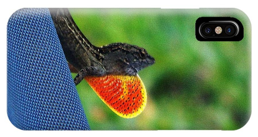 Brown Cuban Anole IPhone X Case featuring the photograph Courtship by Pattie Frost