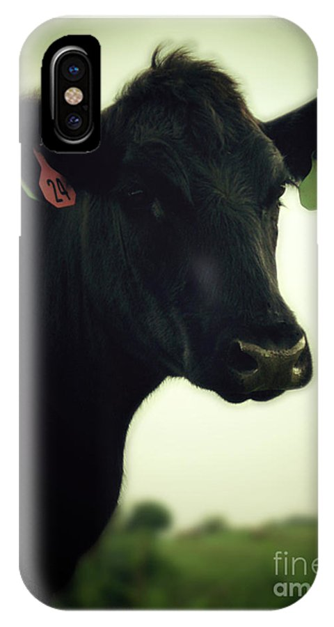 Cow IPhone X Case featuring the photograph Cow In Summer by Penn Patrick