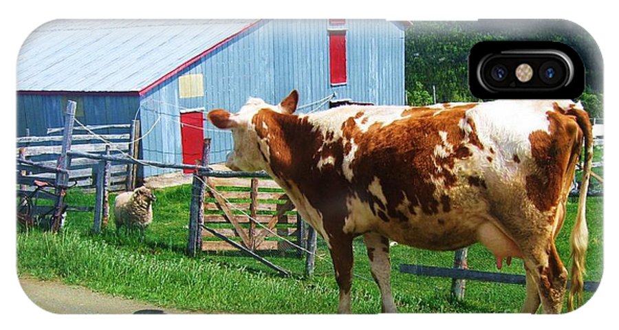 Photograph Cow Sheep Barn Field Newfoundland IPhone X / XS Case featuring the photograph Cow Sheep And Bicycle by Seon-Jeong Kim
