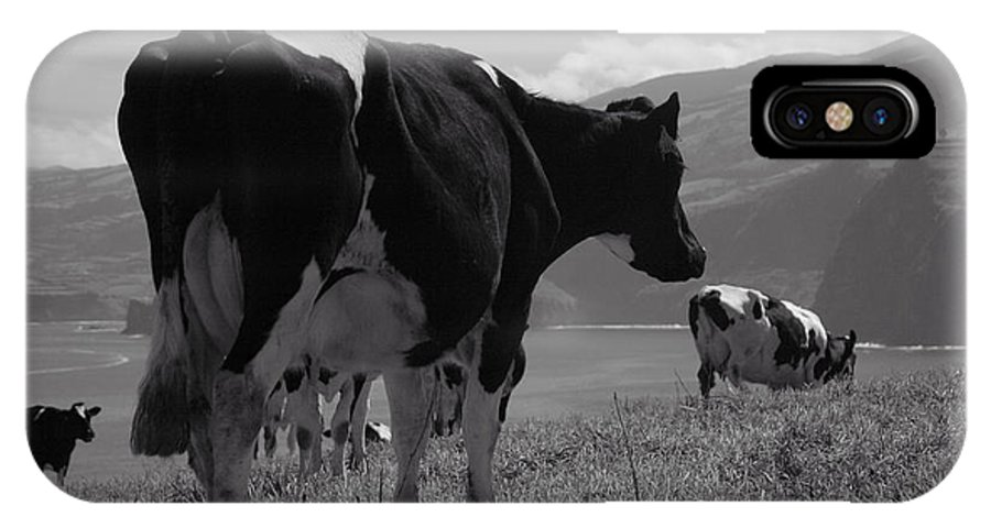 Azoren IPhone Case featuring the photograph Cows by Gaspar Avila