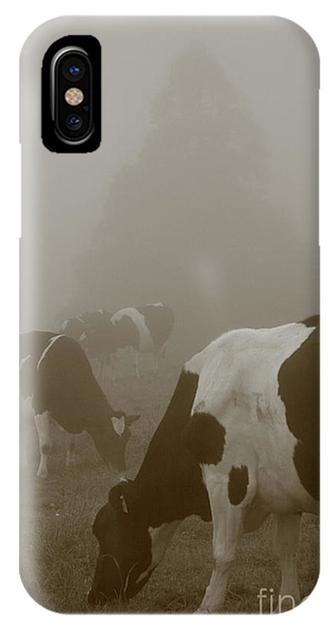Animals IPhone X Case featuring the photograph Cows In The Mist by Gaspar Avila