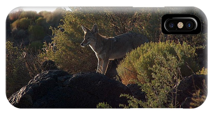 Coyote IPhone Case featuring the photograph Coyote At The Petrogyphs 2 by Tim McCarthy