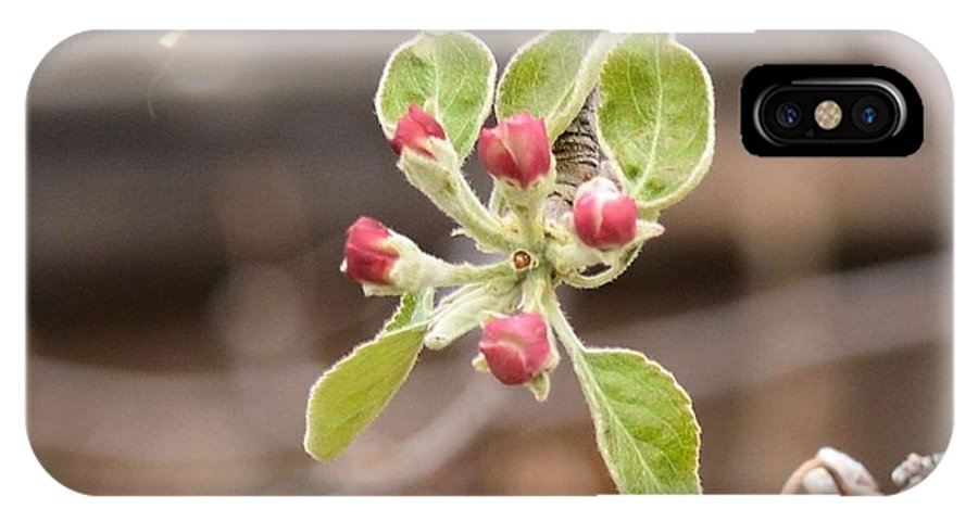 Garden IPhone X Case featuring the photograph Crab Apple Buds by Wendy Fox