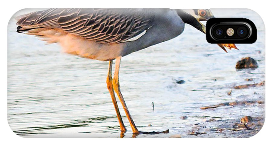 Night Heron IPhone X Case featuring the photograph Cracking The Shell by Marilee Noland