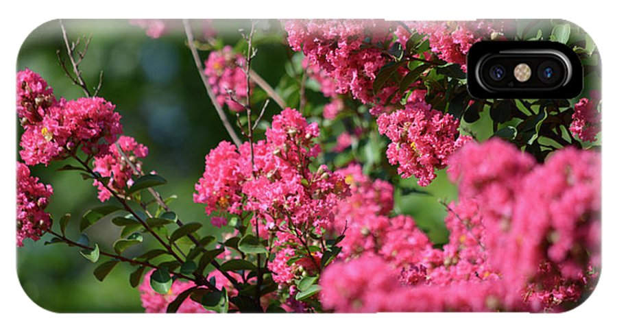 Crepe Myrtle Blossoms 2 IPhone X Case featuring the photograph Crepe Myrtle Blossoms 2 by Ruth Housley