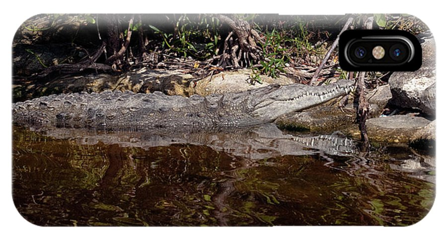 Crocodile IPhone X Case featuring the photograph Crocodile Relaxing by Rodney Cammauf