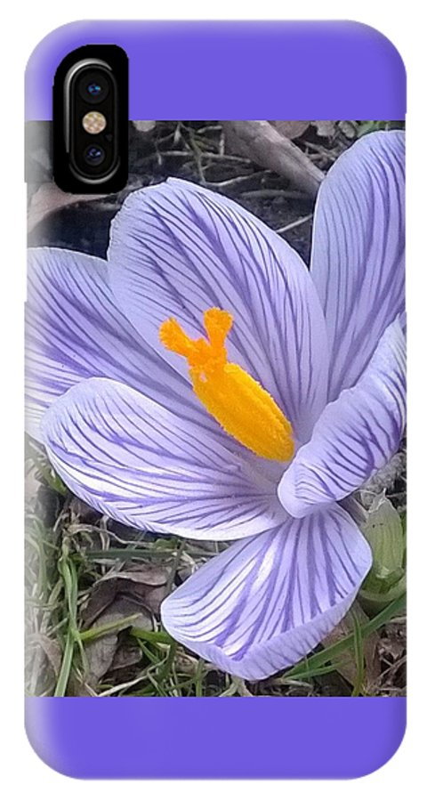Nature IPhone X Case featuring the photograph Crocus Explosion by Jacob O'Neill