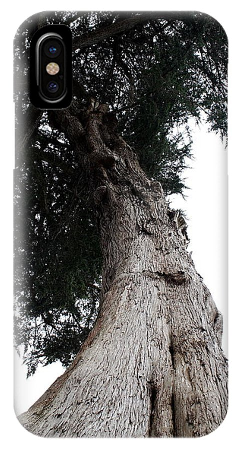 Crone IPhone X Case featuring the photograph Crone Tree by Claire McGee