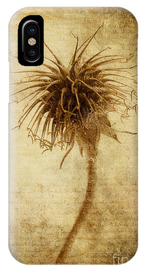 Seed Head IPhone X Case featuring the photograph Crown Of Thorns by John Edwards