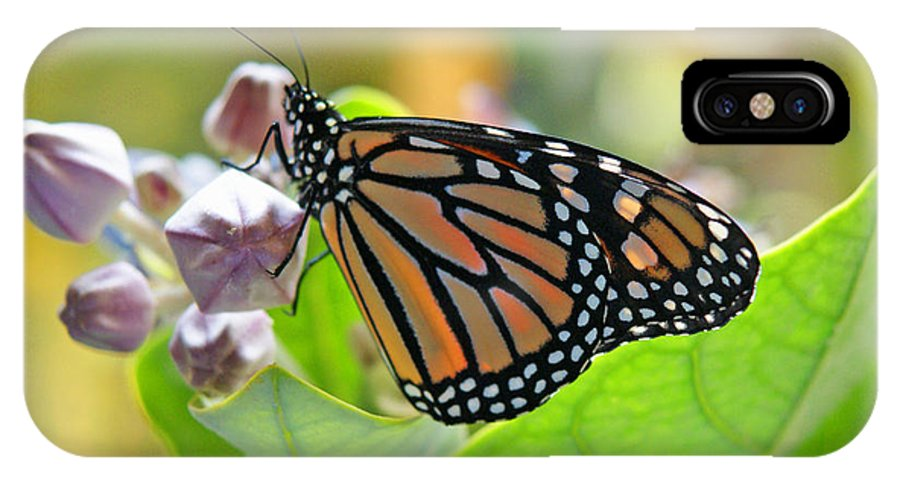 Monarch Butterfly IPhone X Case featuring the photograph Crown Room by Kevin Smith