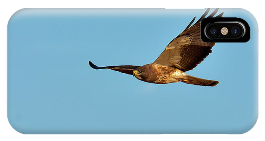 Swainson's Hawk IPhone X Case featuring the photograph Cruising by Michael Allred
