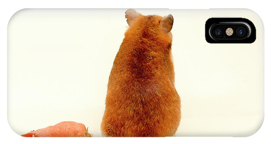 Hamster IPhone X Case featuring the photograph Curious Hamster 1 by Yedidya yos mizrachi