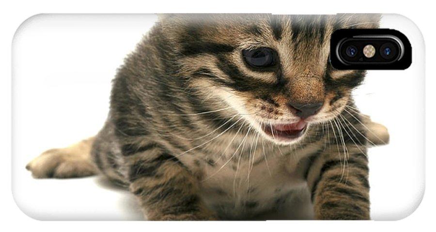 Cat IPhone X Case featuring the photograph Curious Kitten by Yedidya yos mizrachi