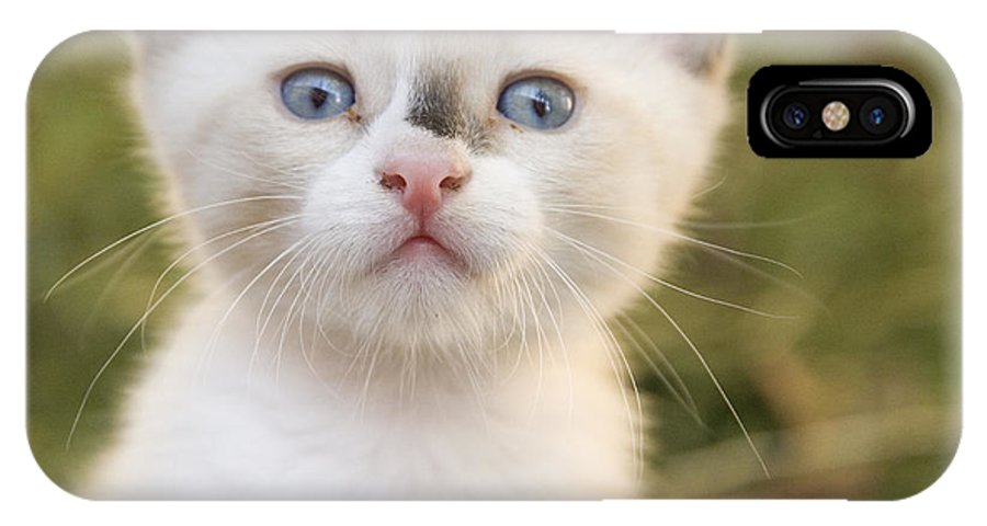 Animal IPhone X Case featuring the photograph Cute 2 Month Old White Kitten by Ian Middleton