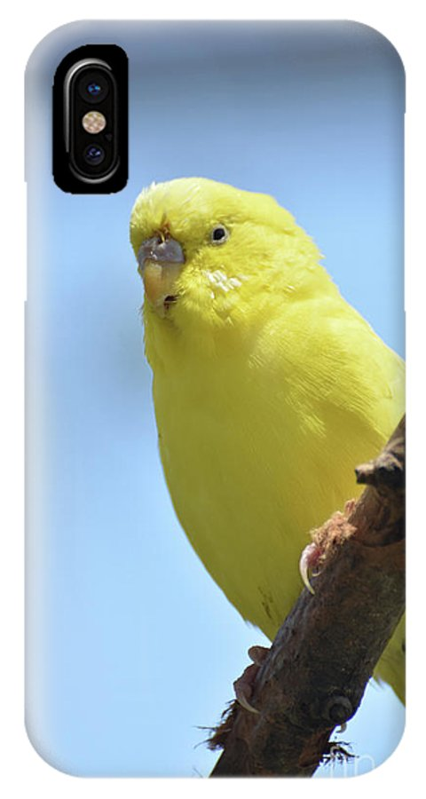 Budgie IPhone X Case featuring the photograph Cute Little Yellow Parakeet In The Rainforest by DejaVu Designs