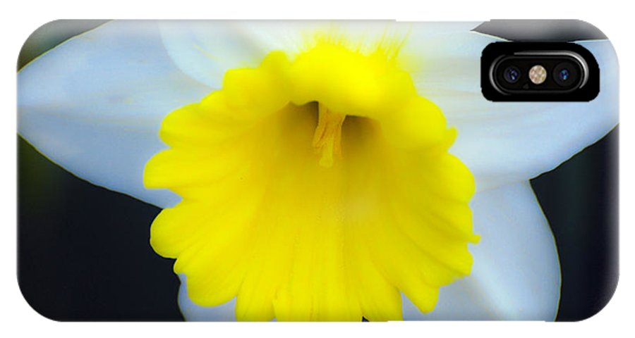 Daffodil IPhone X Case featuring the photograph Daffodil by Larry Keahey