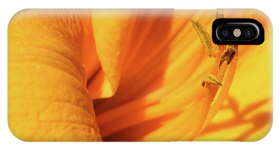 Daffodil IPhone X Case featuring the photograph Daffodil - Peeping Tom 05 by Pamela Critchlow