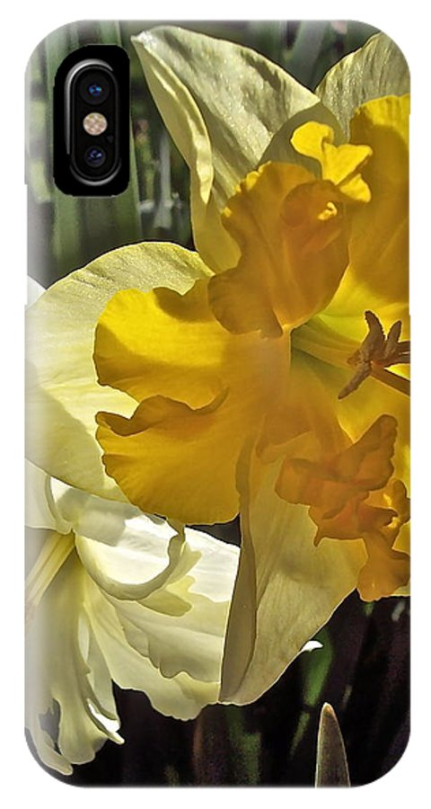 Flowers IPhone X Case featuring the photograph Daffodils 4 by Pamela Cooper