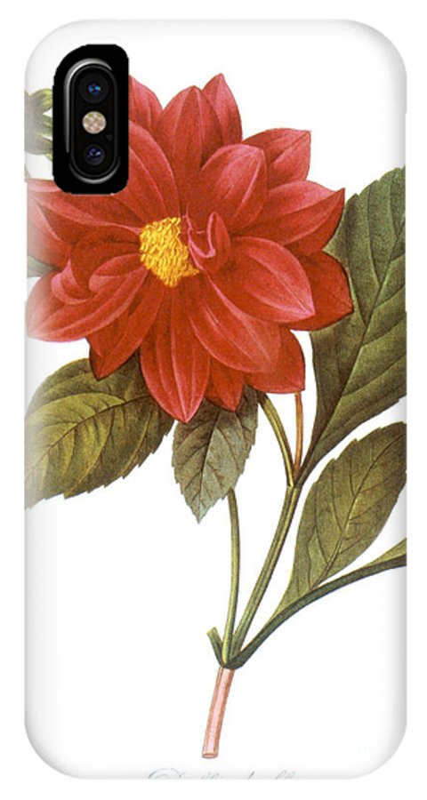 1833 IPhone X Case featuring the photograph Dahlia (dahlia Pinnata) by Granger