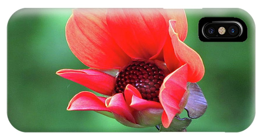Photography IPhone X Case featuring the photograph Dahlia On The Verge by Sean Griffin