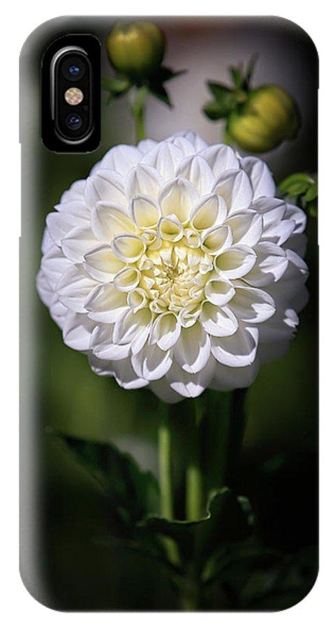 Dahlia IPhone X Case featuring the photograph Dahlia White Flowers II by Athena Mckinzie