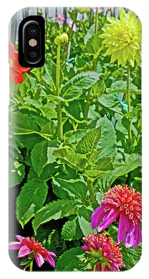 Dahlias By A Fence In Golden Gate Park In San Francisco IPhone X Case featuring the photograph Dahlias By A Fence In Golden Gate Park In San Francisco, California by Ruth Hager