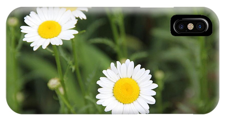 Flower IPhone X Case featuring the photograph Daisies by Allen Nice-Webb