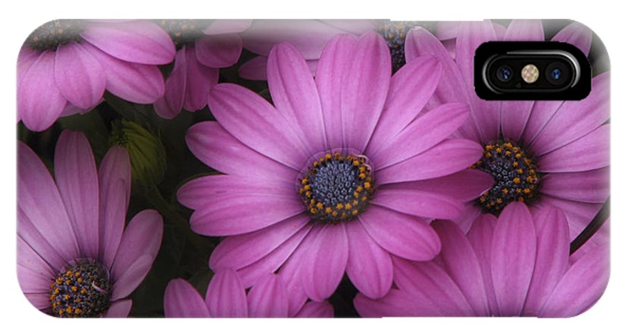 Nature IPhone X Case featuring the photograph Daisies In Dakota by Ches Black
