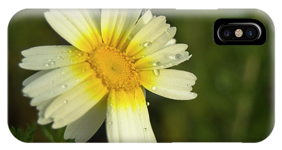 Daisy IPhone X Case featuring the photograph Daisy #5 by Ignacio Leal Orozco