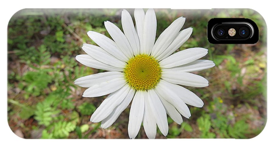 Nature IPhone X Case featuring the photograph Daisy Days by Scott Jochim