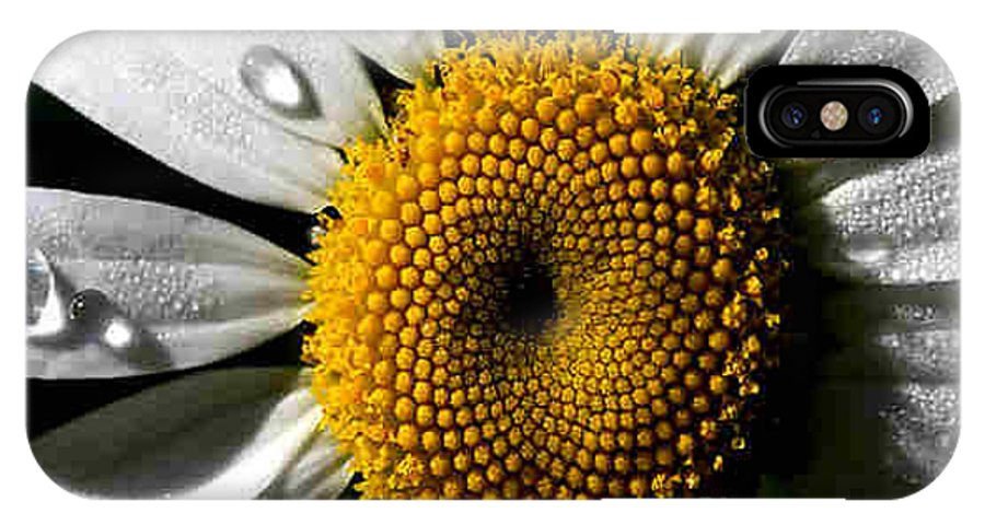 Daisy IPhone X Case featuring the photograph Daisy by Dragica Micki Fortuna
