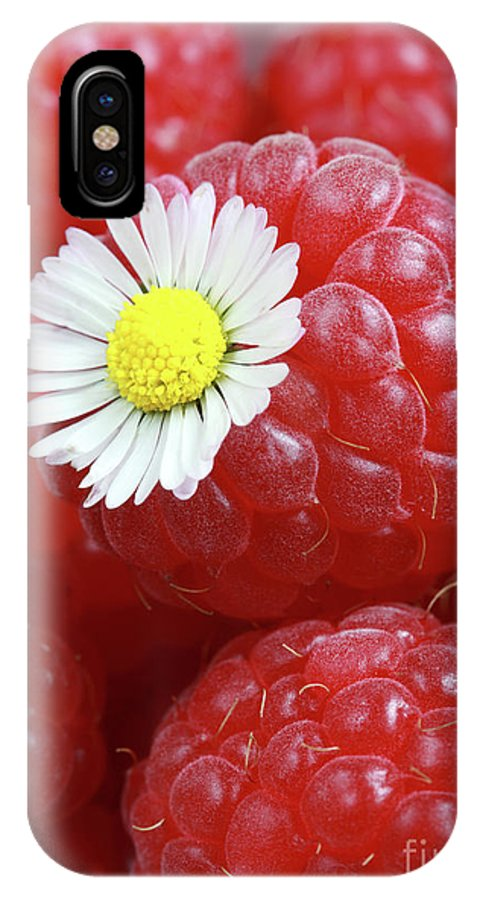 Daisy IPhone X Case featuring the photograph Daisy by Jana Behr