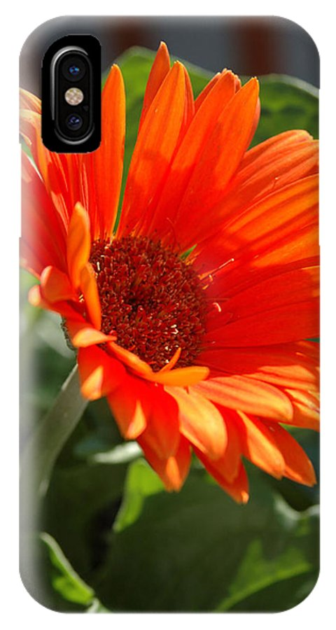 Daisy IPhone X Case featuring the photograph Daisy by Kathy Schumann
