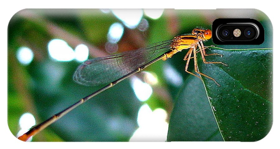 Damselfly IPhone X Case featuring the photograph Damsel by T Guy Spencer