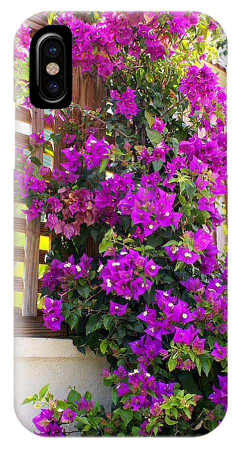 Flower IPhone X Case featuring the photograph Dance Of The Bougainvilla by Florene Welebny
