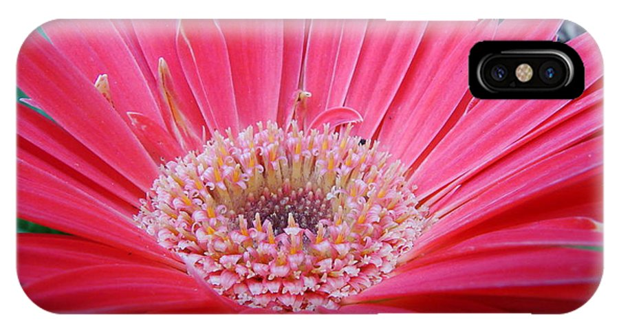 Floral IPhone X Case featuring the photograph Dancing Ballerinas by Mary Halpin